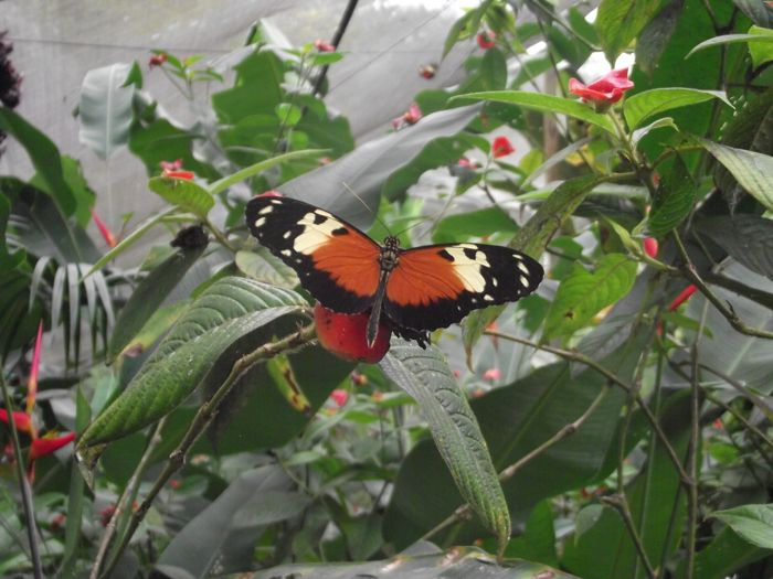 Orange, black and white butterfly on green vegetation.